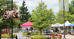 farmer's market in the summer